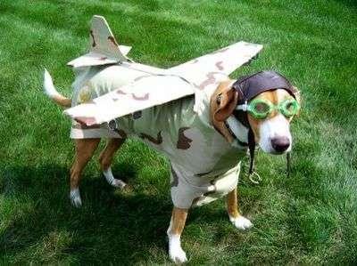 Viaggiare in aereo con il cane guida: i regolamenti di alcune compagnie di volo
