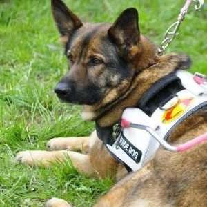 Giudice rigetta ricorso per cane guida su scala mobile: i ciechi non sono di Belluno