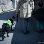 Roberto cammina mano nella mano con suo figlio e il suo fidato cane guida